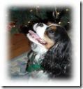 Buster-27s-Christmas-wish