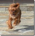 Riley in flight