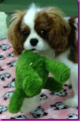 Sunny with toy